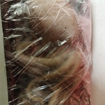 Picture of Frozen Octopus approx 500g